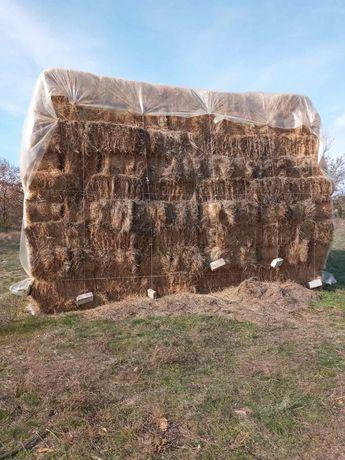 Продам сено в тюках 2,50грн/кг