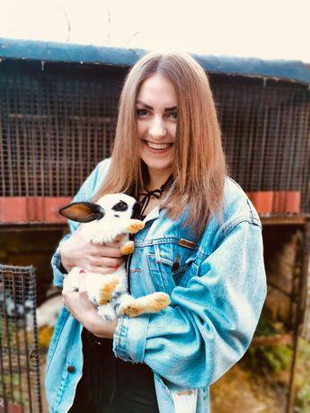 Sprzedaż królików rasy olbrzym srokacz
