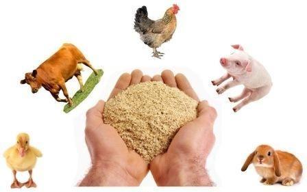 Продаємо зерно та комбікорма