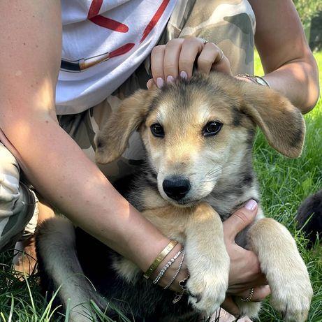 Собака Люк 3 месяца щенок