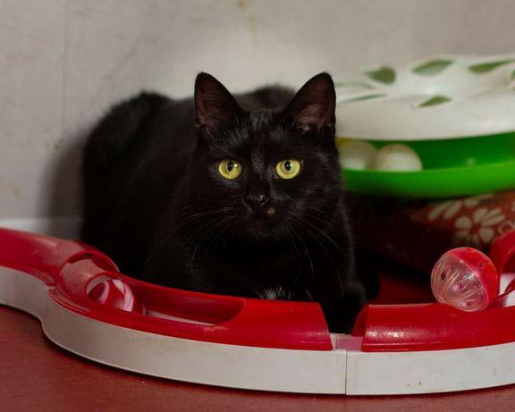 Asia cudowna kotka szuka swojego domu