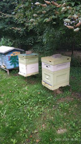 Rodziny pszczele z ulami Dadant