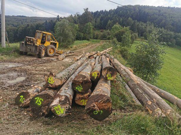 Skup drzewa na pniu
