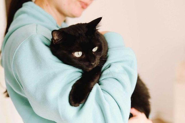 Ава - юная кошка в добрые руки, привита и стерилизована