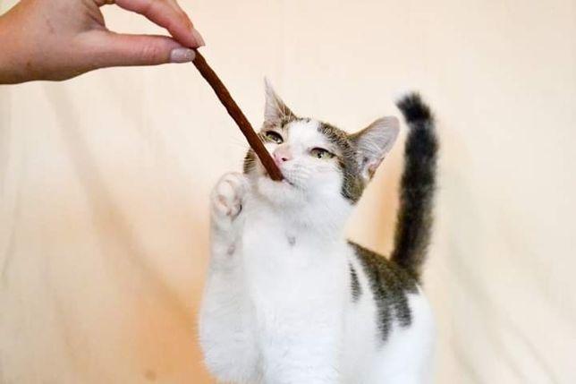 Кошечка для людей с добрым сердцем. 3.5 г. Стерилизована, привита