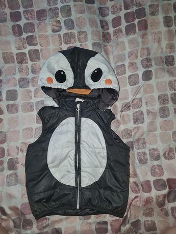Bezrekawnik pingwinek hm