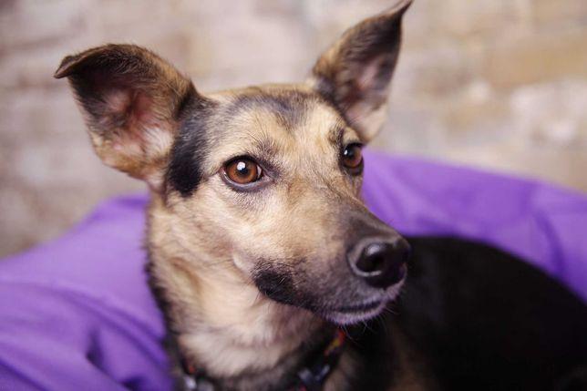 Весточа,.стерил 12кг небольшая собака привита квартире живёт