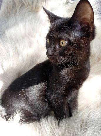 Котенок Миша 3,5 месяца