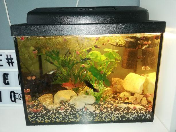 Akwarium 55- 60l,rybki, rośliny,filtr, grzałka,kokos,kamyczki