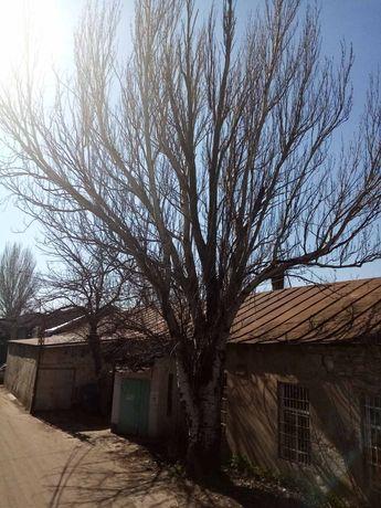 Спил деревьев любой сложности с гарантией аккуратности. Одесса.