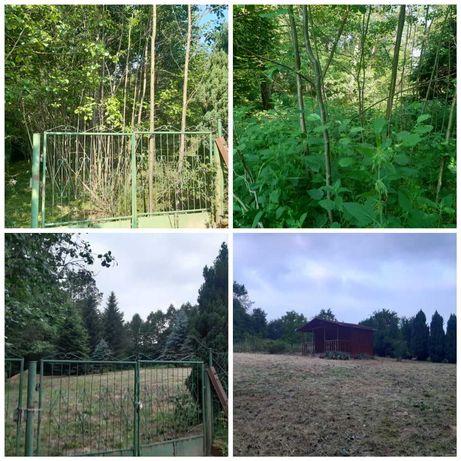Wycinka drzew, zakładanie trawników, rębak, wywóz, prace ogrodowe