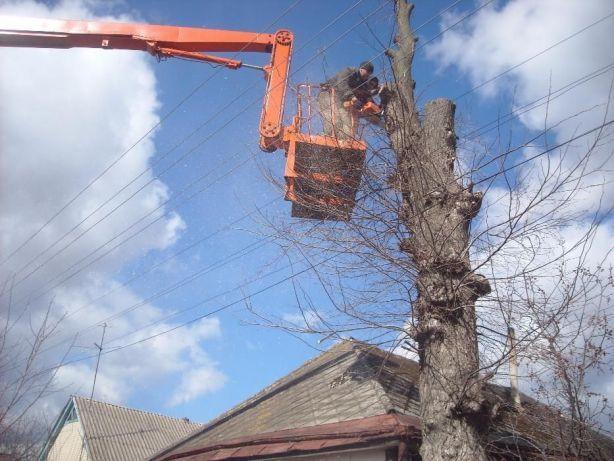 зрізання дерев,валка,обрізка,спил,зрізати дерево,порізка,зрізаємо