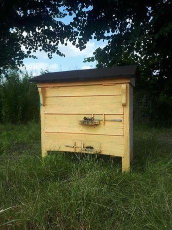 Ule warszawskie poszerzane razem z pszczołami