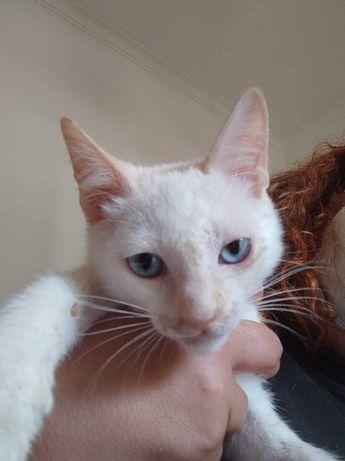 Caju gatinho para adoção