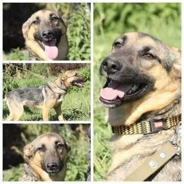 Небольшая собака Соня, контактная и ласковая