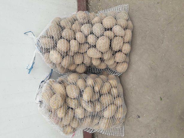 Ziemniaki jadalne Irga i Catania