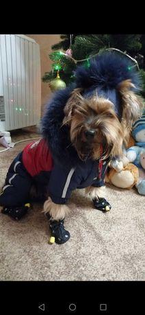 Зимний комбез и шапка для собак