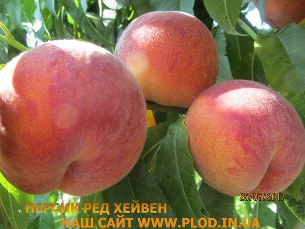 Саженцы персика, нектарина, сливы, алычи, абрикоса, черешни, яблони