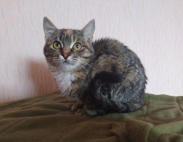 Отдам котят_ котята_Майя