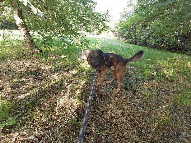 Borys ok. roczny łagodny psiaczek ok. 10 kg KOCHANY szuka domku