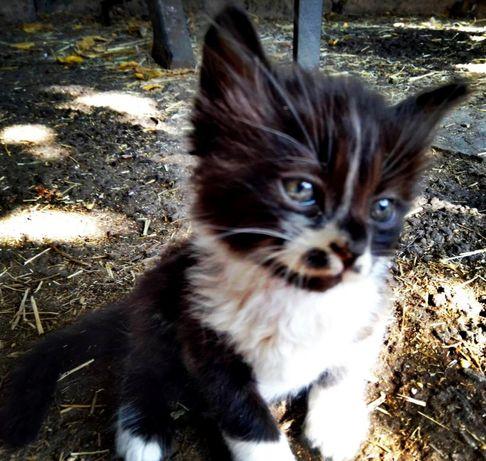 Котята, котёнок, котик (сообщения на вайбер)