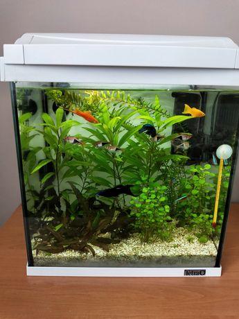 Akwarium Tetra z obsada,roślinami i wyposazeniem