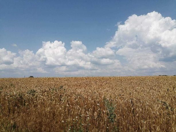 Дача ( участок 6 соток ) / с. Кожуховка (30 км Киева ) или поменяем