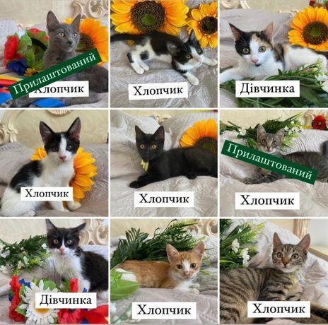 Різні кошенята шукають домівки!