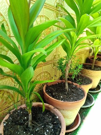 Plantas ornamentais resistentes  para exterior