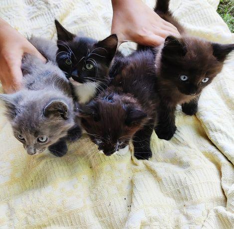 Подарую маленьких кошенят