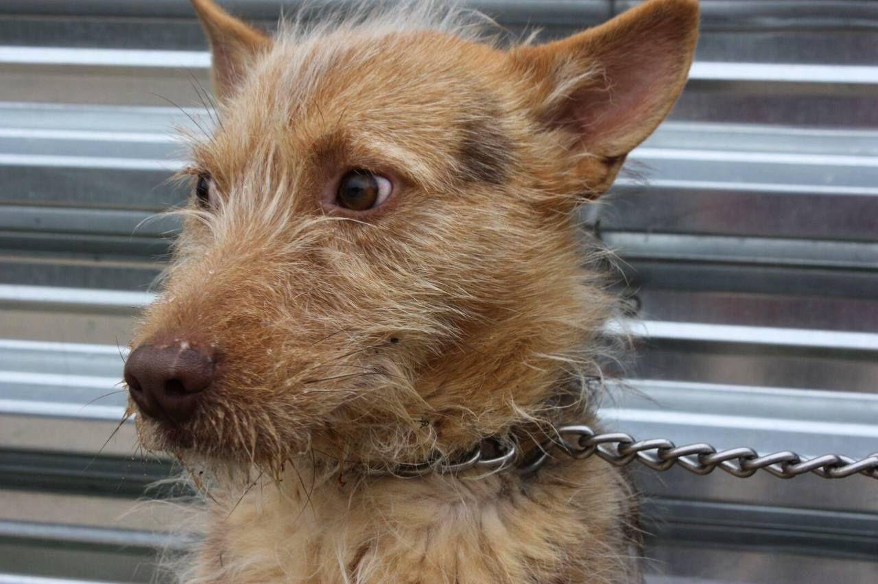 Собака, 7 месяцев Фредди, пёс, пес собачка