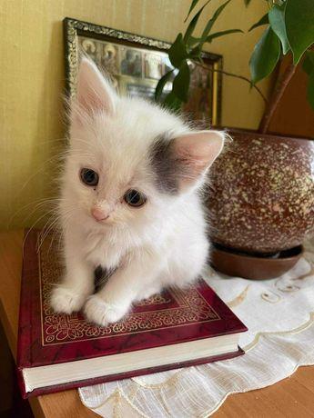 Срочно котеночек девочка ищет любящую семью