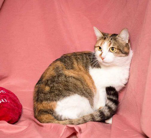 Жасмина, черепашка/полосатая с белой грудкой, кошечка, кошка 1 год