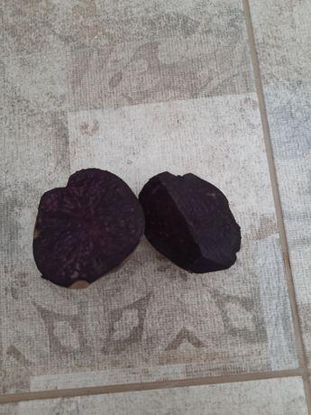 Картофель с цветной мякотью Солоха Хортица Снежинка