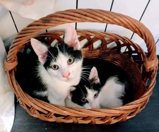 Pik i Pok - bracia do adopcji