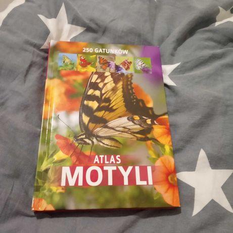 Atlas motyli 250 gatónków