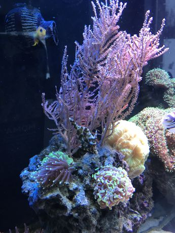 Ryba brzydal do akwarium Morskiego