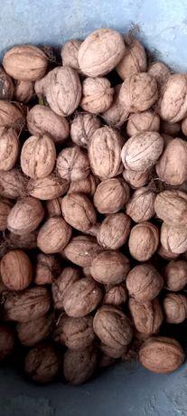 Продажа грецкого ореха