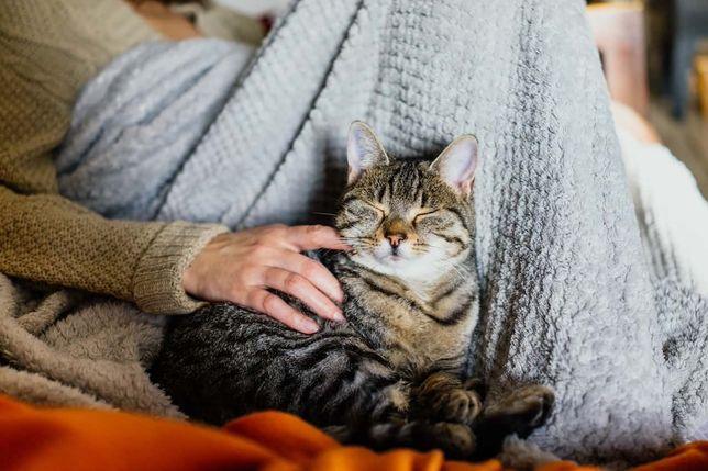 serviço de catsitting