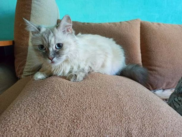 Кошка, которую мучали, нуждается в семье
