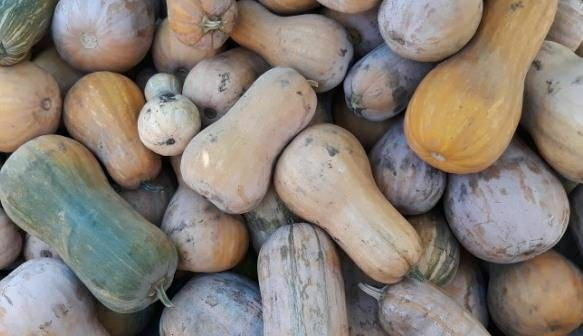 Продам кабак без ГМО