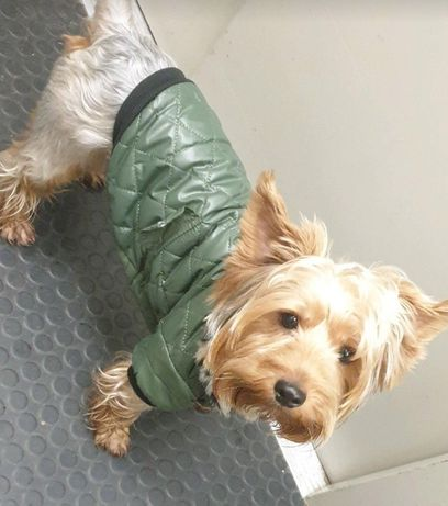 Весенне-осенняя курточка для Собак