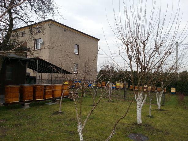 Rodziny pszczele na ramce wielkopolskiej