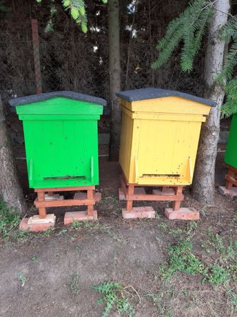 Ul/ule z pszczołami
