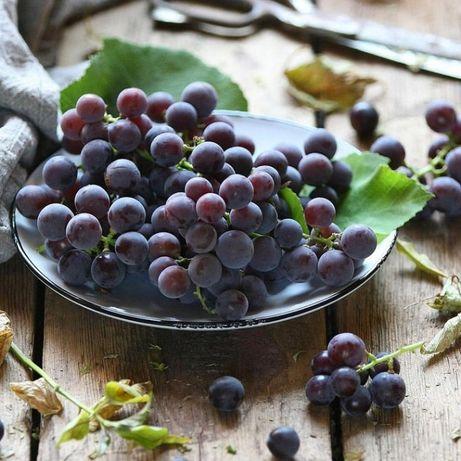 Виноград 40руб/кг. Лидия на вино, винный.