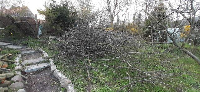 Drzewo śliwka na wędzenie