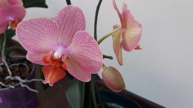 Орхидеи обмен своих растений