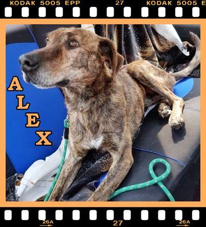 ALEX – dojrzały, dostojny i bardzo spokojny