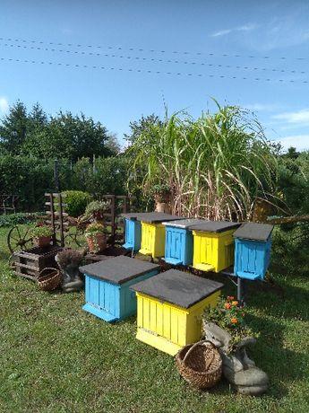 Pszczoły odkłady
