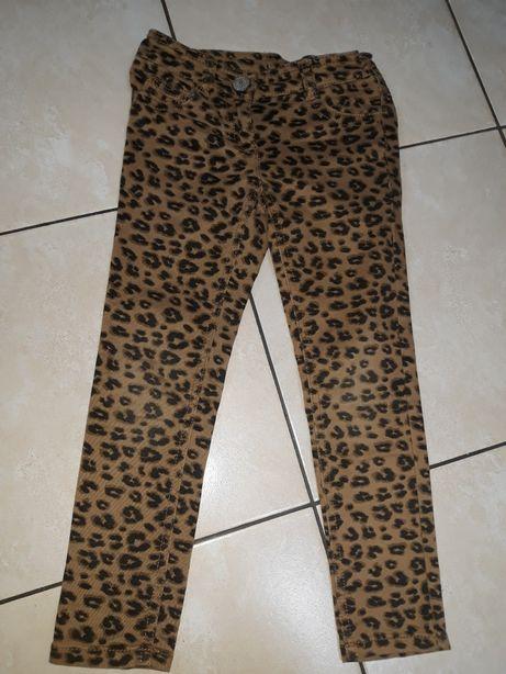 NEXT spodnie w cętki 5 lat
